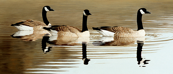 Trio by Peter Eades